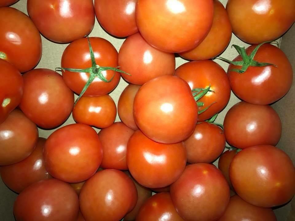 Tomatoes - Loose Salad Tomatoes