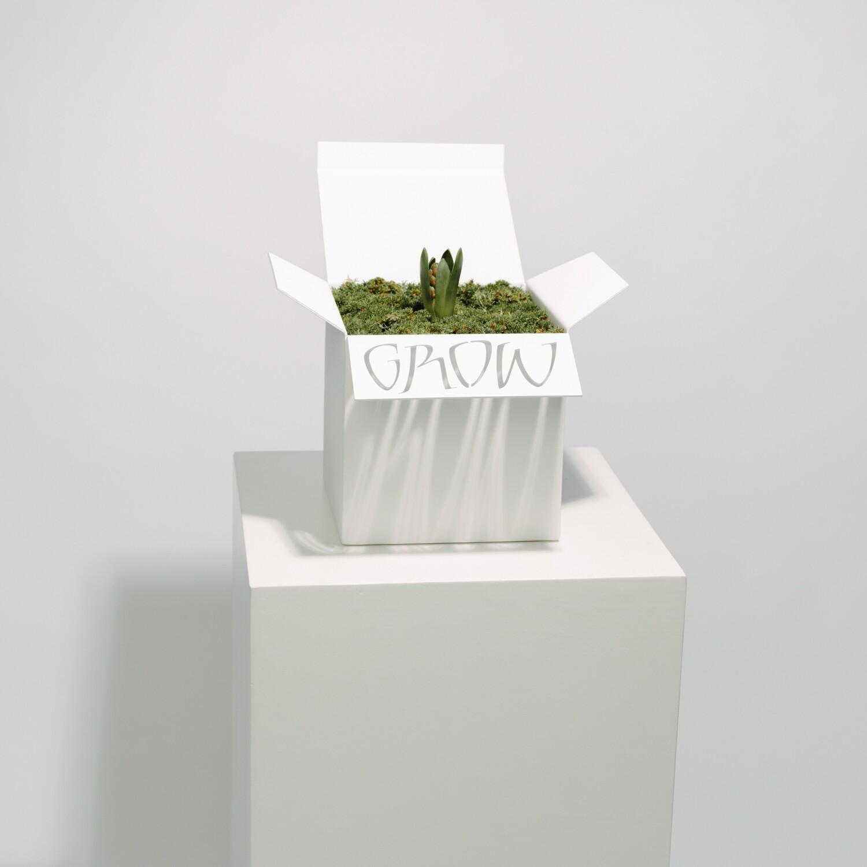 GROW BOX - MAUD BEKAERT
