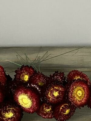 Helichrysum (wired) 20 stems in red