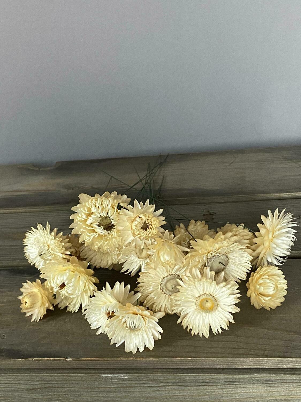 Helichrysum (wired) 20 stems in white/cream