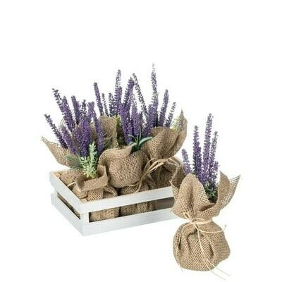 Lavender Potted Plant