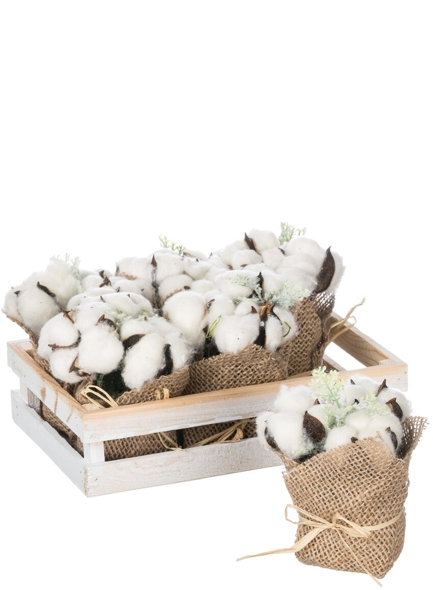 Cotton Potted Plant