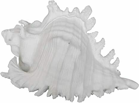 Conch Shell White