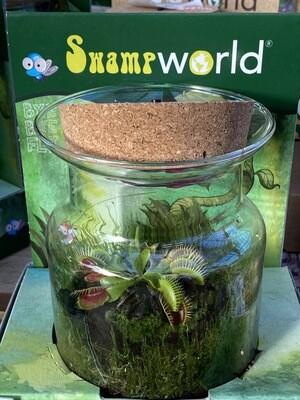 Terrarium verre plante carnivore