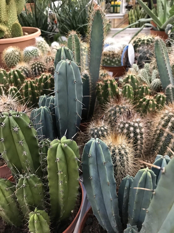 Cactus pot 13cm
