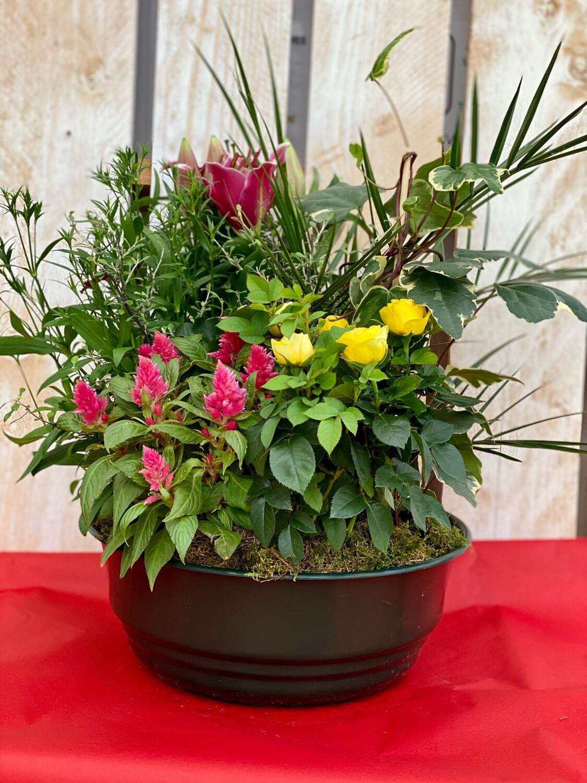 Composition de plante fleurie