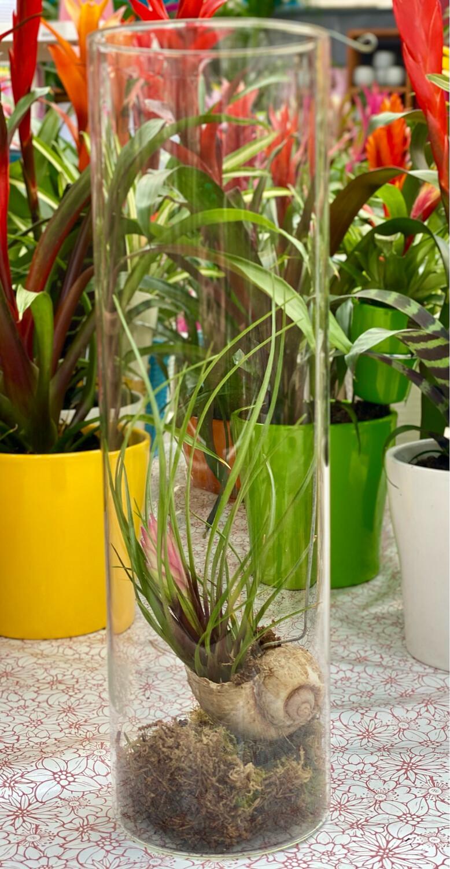 Composition terrarium escargot Ø 11 cm