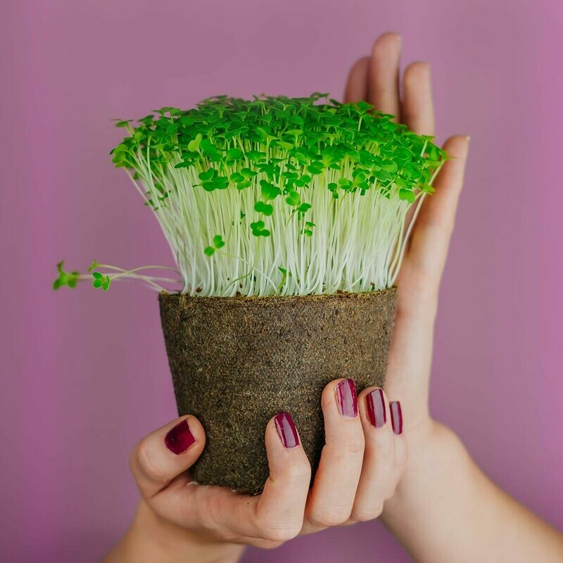 Mikroliście Brokuła