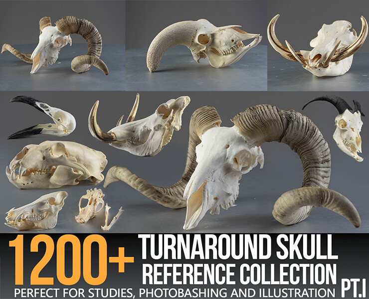 1200+ Turnaround Skull Collection Reference Pictures