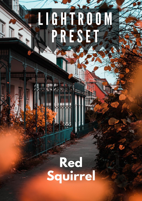 KOSTENLOS - Lightroom Preset - Red Squirrel