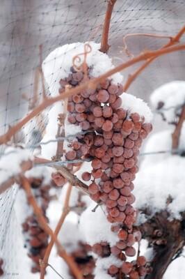 Ice Wine Style