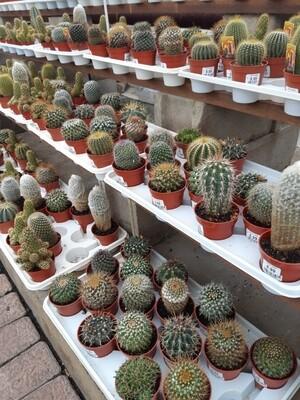 Cactus-Assorted 3.5