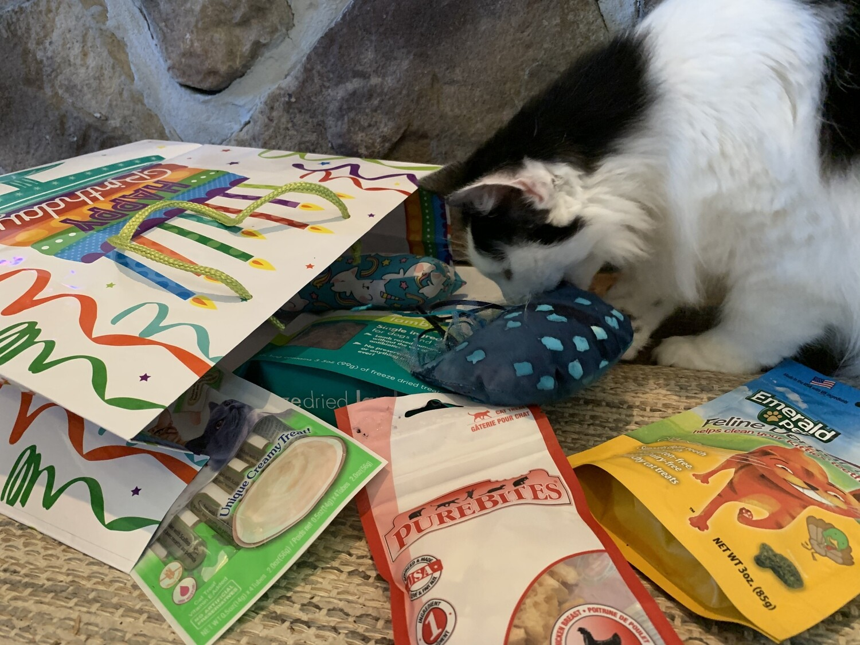 Birthday Bundle- Cat