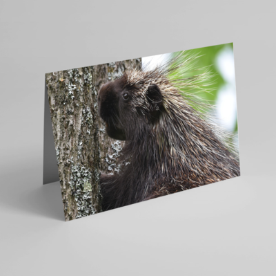 Set of 6 Folded Note Cards - Animals No. 1