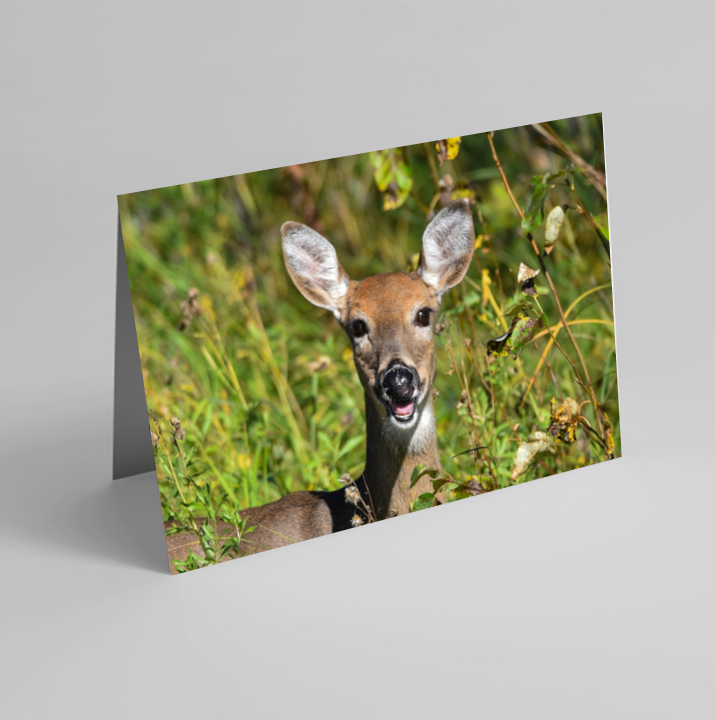 Set of 6 Folded Note Cards - Animals No. 2