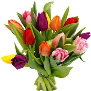 Tulipes variées