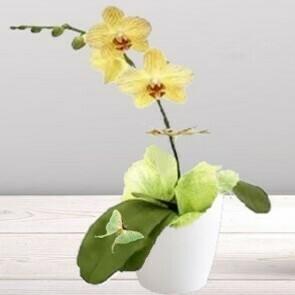 Orchidée jaune orangé 1 branche