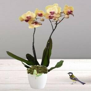 Orchidée jaune orangé 2 branches