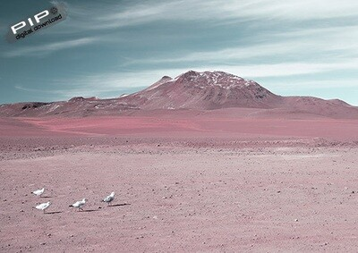 Altiplano, Bolivia, Printable Art