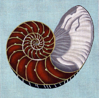 Cut Nautilus     (handpainted by Melissa Shirley)