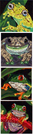 Frog Coasters, Set of 4       (Handpainted by Barbara Russell Designs)