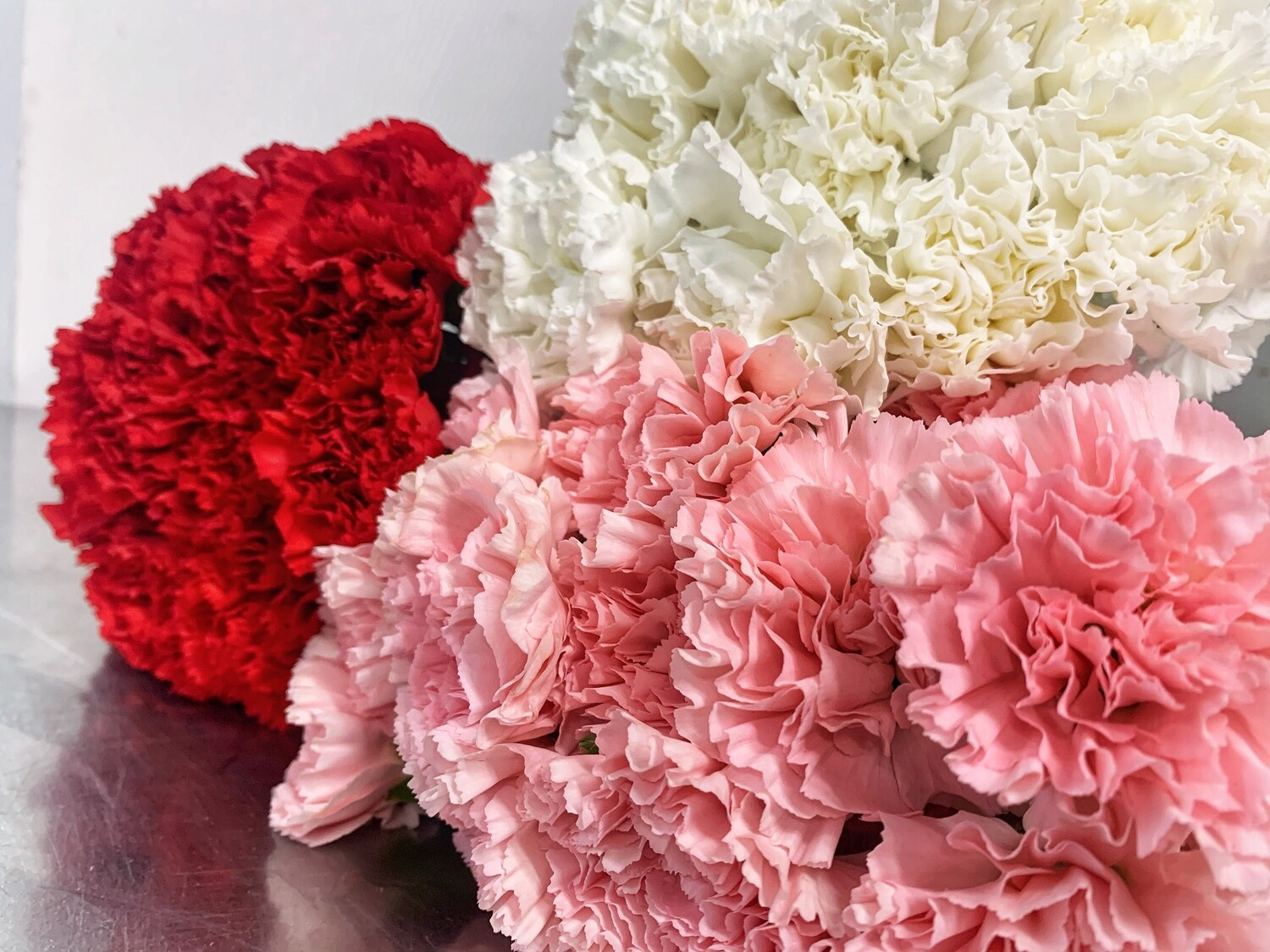 CARNATIONS (100 Stems)
