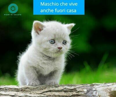 Piano di Salute Gatto Maschio Outdoor
