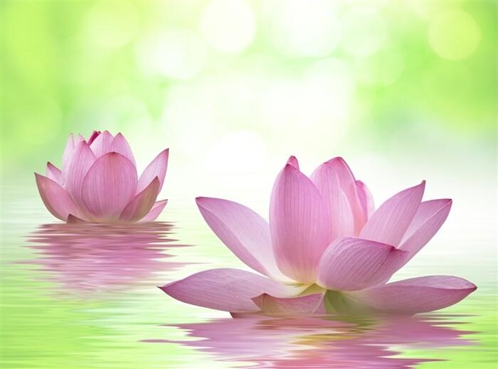 Lotus - Poster Print