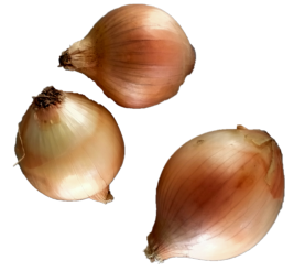 Certified Organic Brown Onion