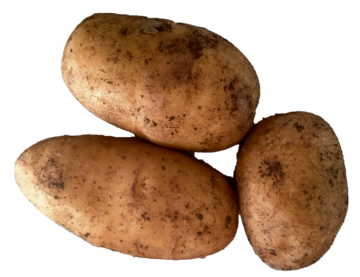 Certified Organic Dutch Cream Potatoes