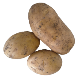 Certified Organic Sebago Potato