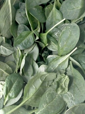 Certified Organic Spinach Leaves