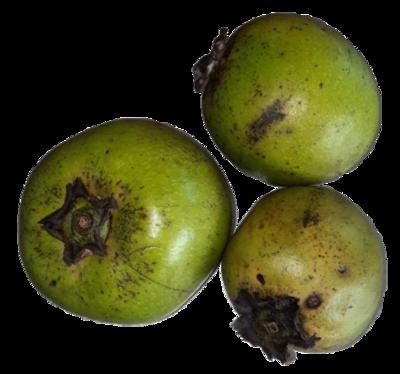 Certified Organic Sapote