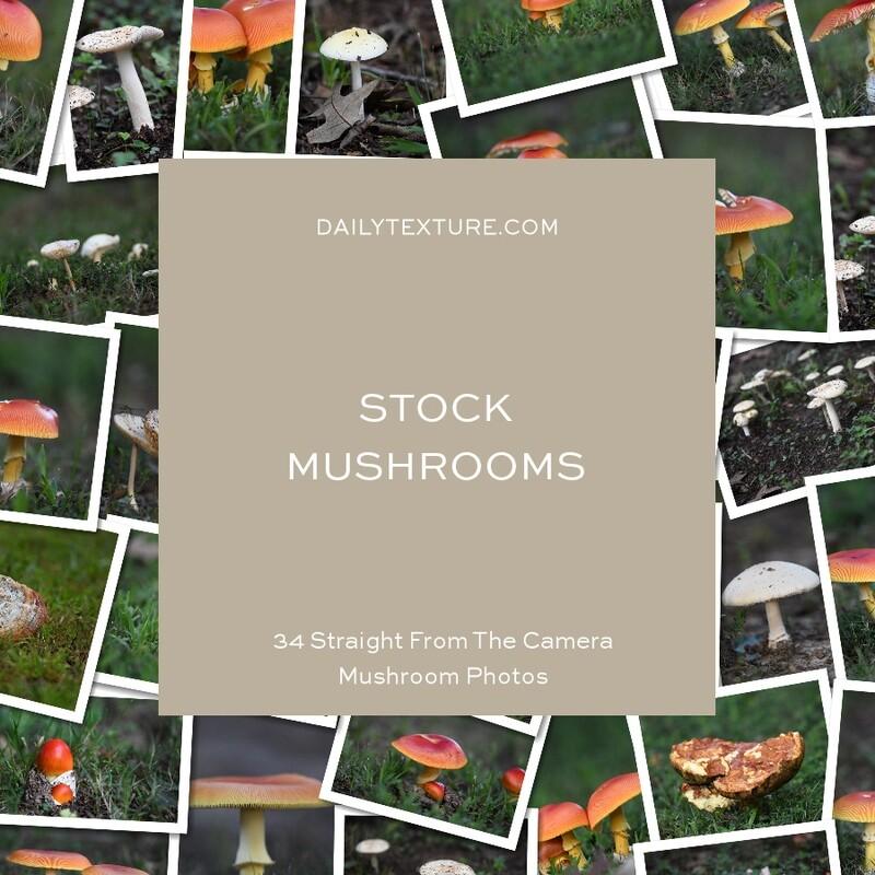 Daily Texture Stock Photos - Mushrooms