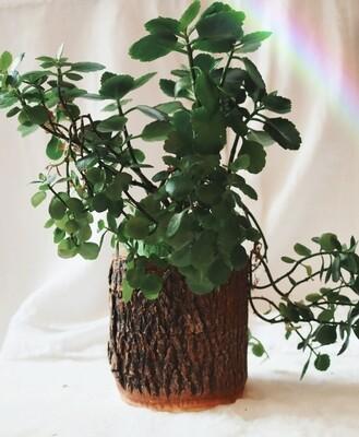 Natural wood planter
