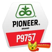 P9757 FAO 380