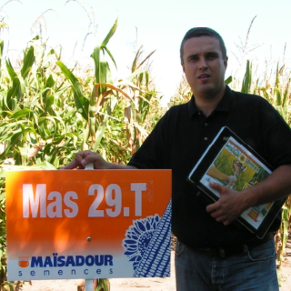 MAS 29 T