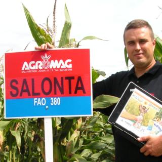 Salonta FAO 360 (70.000 szem/zsák)