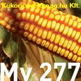 Mv 277 FAO 310