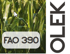 Olek FAO 370