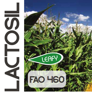 Lactosil siló FAO 460