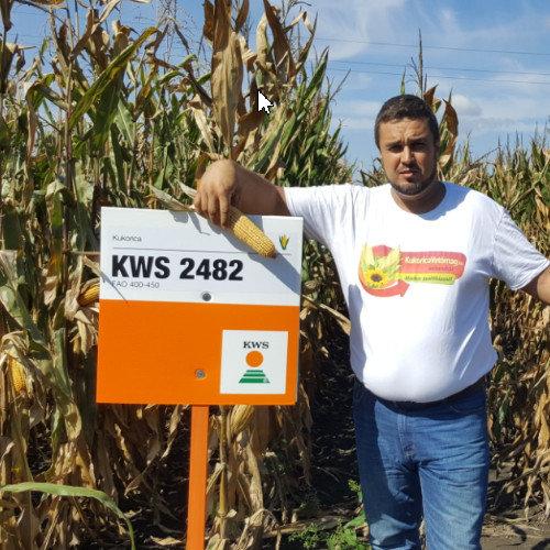 KWS 2482 FAO 400-450