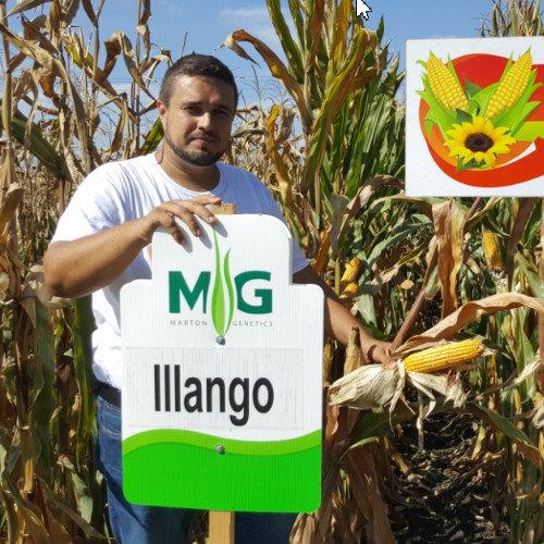 Illango FAO 530
