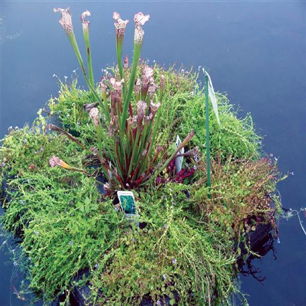 Mini Pond Raft, planted