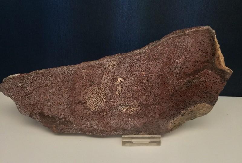 Stunning pink gem bone specimen