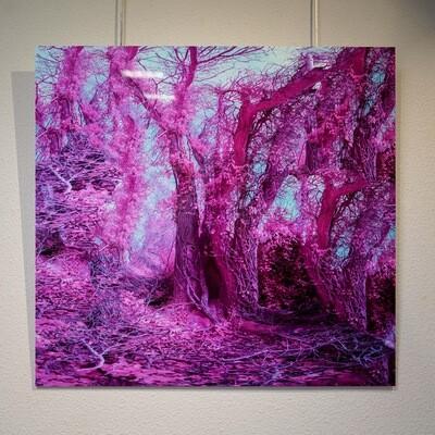 Friston Forest Glitch 3