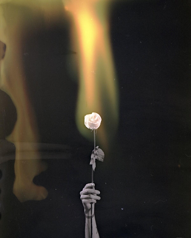 Fleur de Lumiere