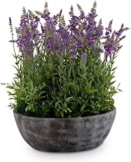 Potted Bowl of Purple Lavender