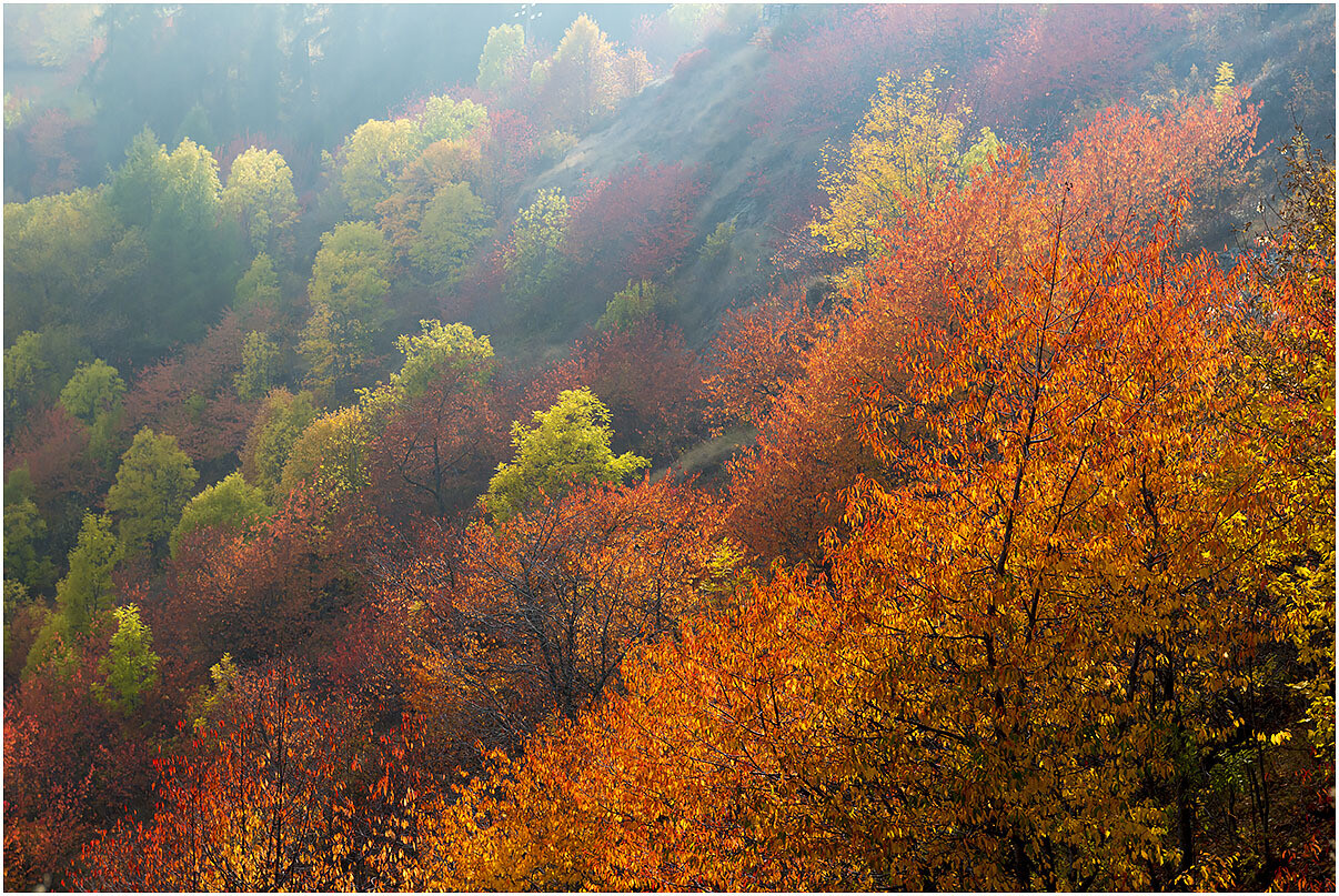 Fiamme d'autunno