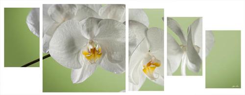orchidea multiformato 5pezzi / 203x76 cm codice 078